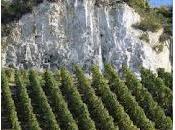 Guida migliori champagne dell'anno 2011: quelli prodotti vitigni rari