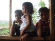 Olio palma: strage Lampung