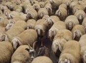 dogana delle pecore abita Power