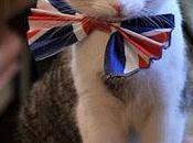 Larry, gatto downing street divieto entrare nell'appartamento privato cameron