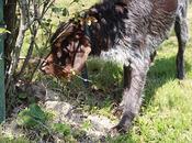 Difendiamo nostri amici animali botti Capodanno...e giorni seguire