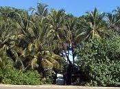 Parco Nazionale Cahuita
