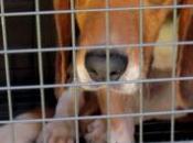 Lotta contro vivisezione, prima condanna Italia laboratorio fuorilegge