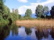 distanza anni dalla Convenzione Rio, l'Italia finalmente elabora propria strategia nazionale tutela della biodiversità