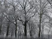 Chimiche nevose
