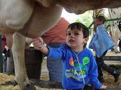 Latte scaduto ribollito: ancora bufala corre rete