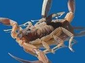 Nuova frontiera contro cancro? Escozul: farmaco antitumorale ottenuto veleno dello scorpione azzurro, Cuba l'azienda Labiofam distribuisce prodotto gratuitamente soltanto nell'isola