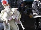 animali FUKUSHIMA cambiamento dell'ecosistema Giapponese