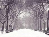Ancora Neve lunedì martedì allerta meteo Emilia Romagna