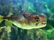 Funny Video, pesce palla insegue senza sosta laser sott'acqua| VIDEO