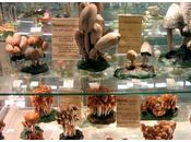 Museo Fungo Scienze Naturali Boves: funghi rarissimi, spugnole altezza straordinaria, velenosi, raccolta appassionata.