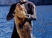 Pochi pesci, molte norme. Parola Navarrini