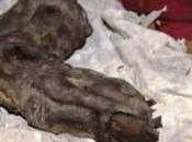 Dito gigante mummificato ritrovato Egitto.