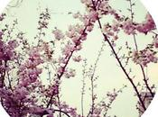Pensierini primavera