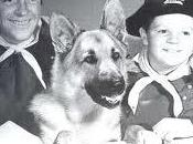 Rin-Tin-Tin, cane Hollywood uscito dalla trincea