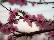 arrivata anche Primavera, sono felice per...