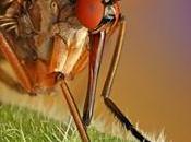 Nella foresta amazzonica sono 180.000 specie insetti sconosciute.